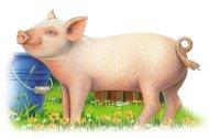 Ravensburger Kostky domácí zvířata - 6 ks