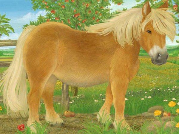 Ravensburger Kostky Domácí zvířata - 12 ks