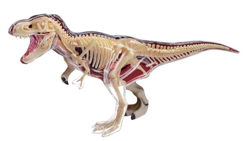 HM STUDIO 4D Model - T-Rex